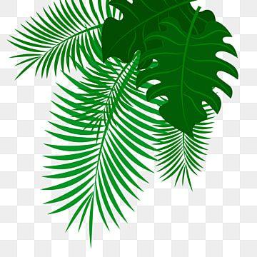 Arecaceae Leaf Palm Branch Palm Leaf Palm Leaf Transparent Background Png Clipart Palm Background Autumn Leaf Color Leaf Illustration