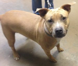 Pin On Help Save The Bully Breeds