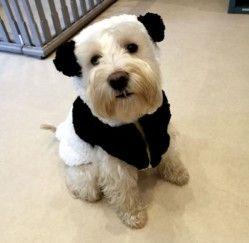 Dog Costume Dog Grooming Dog Boutique Pet Shop London Dog Boutique Dog Costume Dog Grooming
