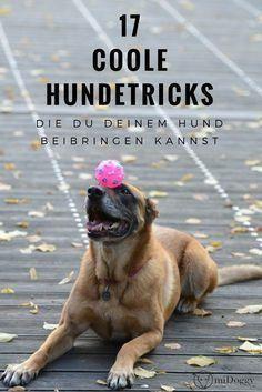Hundetricks Archives Pineagle Dog Training Dog Training