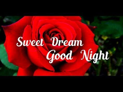 Good Night Wishes Greetings Whatsapp Message Video E Card Sms Quotes Images Free Download Youtube Good Night Wishes Good Night Video Download Night Wishes