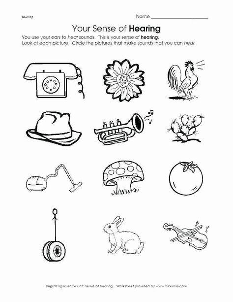 5 Senses Printable Worksheets Sense organs Worksheets for