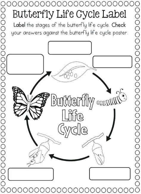 Life Cycle Of A Butterfly Coloring Page Printable Butterfly Colori