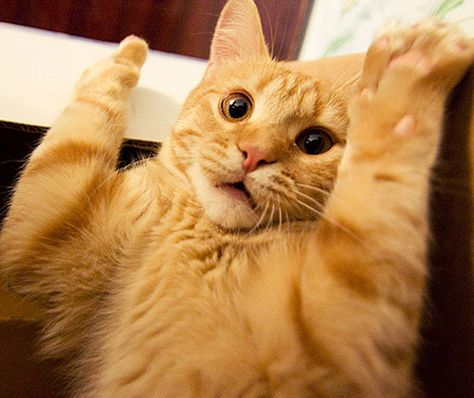 cats are probably the funniest animals in the world did you know