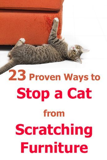 23 Proven Ways To Stop A Cat From Scratching Furniture - Advises To Cat Owners . - 23 Proven Ways To Stop A Cat From Scratching Furniture – Advises To Cat Owners – - Furniture Scratches, Cat Furniture, Cat Scratch Furniture, Stop Cat Scratching Furniture, Cat Scratching Post, Sweet Cat, Cat Hacks, Cat Care Tips, Pet Care