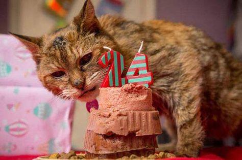 Happy Birthday Poppy Katze Poppy Ist Mit 24 Jahren 114