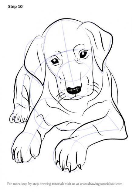 Best Dogs Drawing Simple Tutorial Ideas Dogs Drawing Puppiesdrawing Hund Zeichnen Dobermann Welpen Hunde