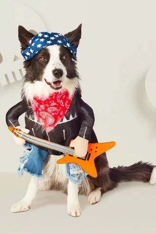 57 Dog Costumes That Get Your Pup In On The Halloween Fun Pet