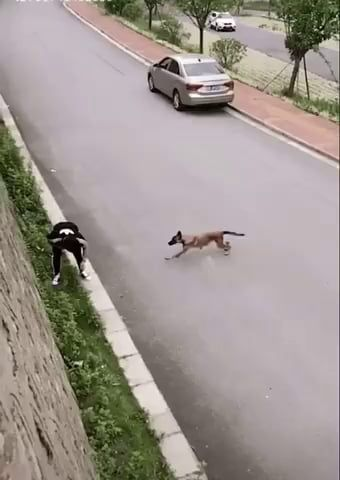 This dog has hops - 9GAG
