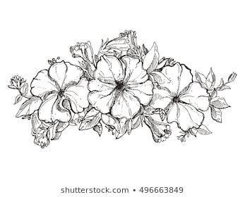 Black And White Hand Drawn Floral Ornament With Petunia Flower Sketch Vector Eps 8 Black And White Flower Tattoo Petunia Tattoo Petunia Flower