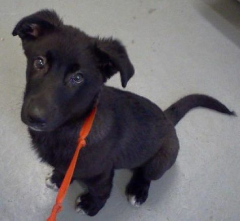 Jaxon Sooo Soft And Fuzzy What A Puppy Adopt Jaxon Puppies Pet Adoption Fuzzy