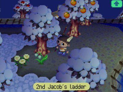 Gold Member Jeff S Acww Blog In 2020 Jacob S Ladder Animal Crossing Pink Box