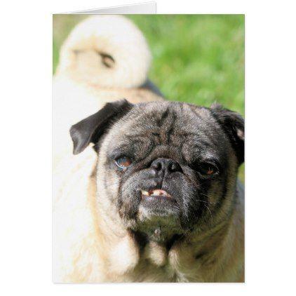 Cute As A Pug Zazzle Com Pugs Black Pug Puppies Old Pug