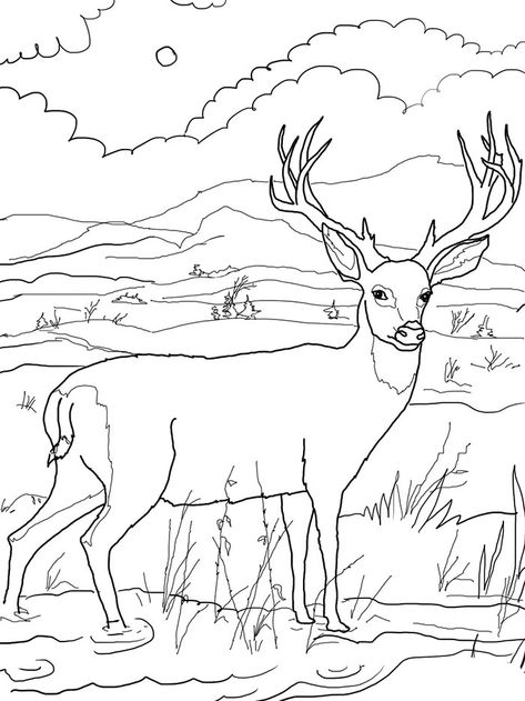 Free Coloring Pictures For Kids Deer Learning Printable Coloring