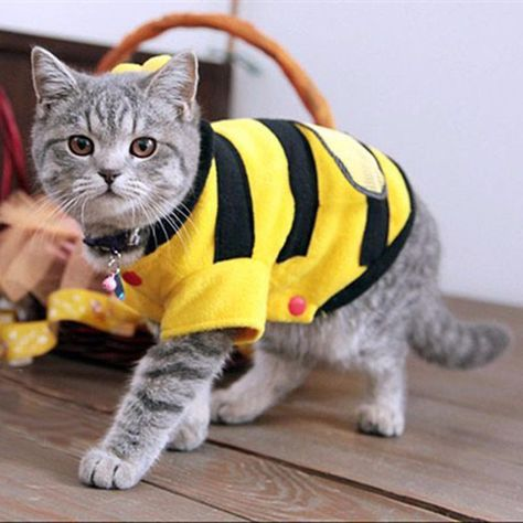 ee790fe4b39b Cat Bee Wings Hoodie Costume Clothes