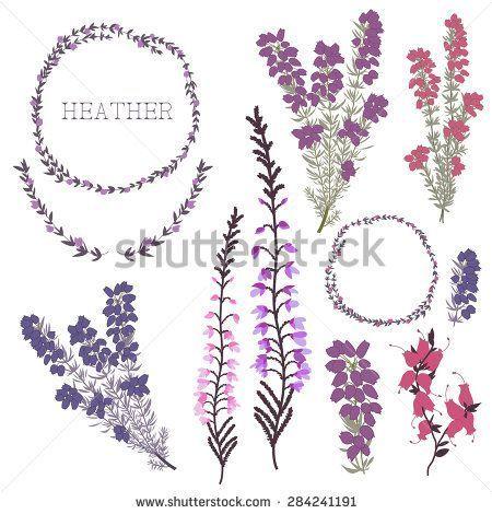 Image Result For Heather Tattoo Designs Scottish Tattoos Heather Flower Heather Plant