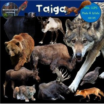 This Is A Wonderful Taiga Animal Biome Clip Art Set For All Of Your Design And Classroom Needs This Collection Offers 24 Clip Photo Artistic Animals Clip Art