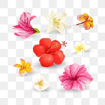 Set Of Vector Illustrations Of Tropical Hibiscus Flowers And Lilies With Pink Red Orange And White Petals Isolated On A White Background In A Realistic Style Template Design Elements Print Flower Hibiscus