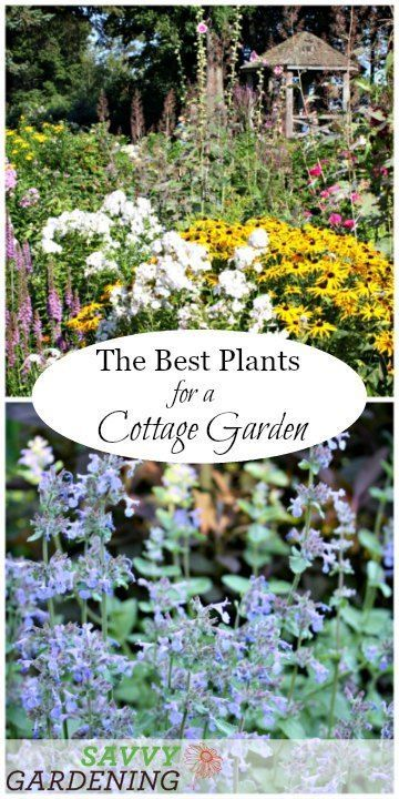 A List Of Cottage Garden Plants That Are Perfect For Informal