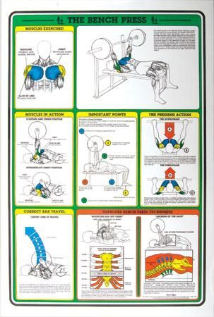Bench Press Fitness Chart Best Bench 2018