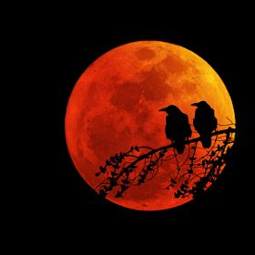 """deepsoulfury: """" Art Photography-Birds on red moon """" - Anna Liebergesell - - Roter mond - Fotografie"""