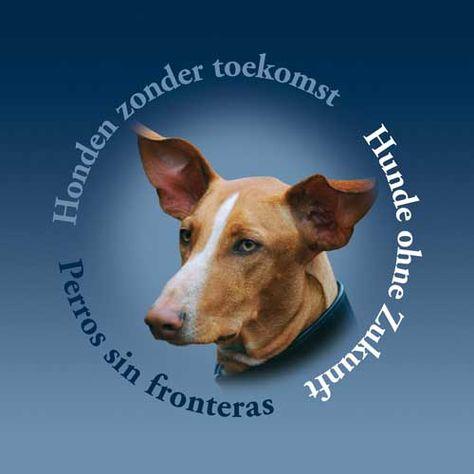 honden zonder toekomst (hzt_nl) op pinterest
