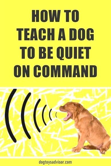 Dog Training Course Dog Training Zapper Collar Dog Training 6
