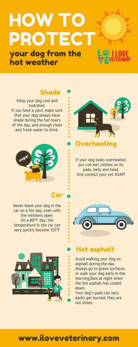 How To Protect Your Dog From The Hot Weather I Love Veterinary Pet Health Care Hot Weather Dog Infographic