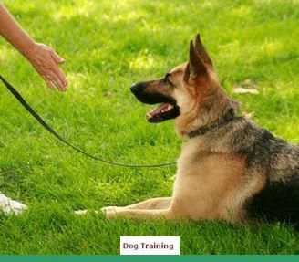 Info And Ideas For Command For Dog Training When Vacationing