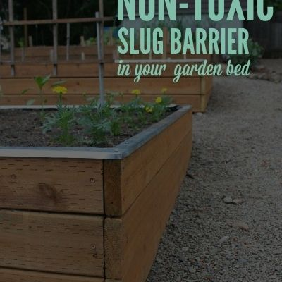 Get Rid Of Slugs Building A Raised Garden Garden Beds Planting