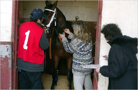 drug test horses - career