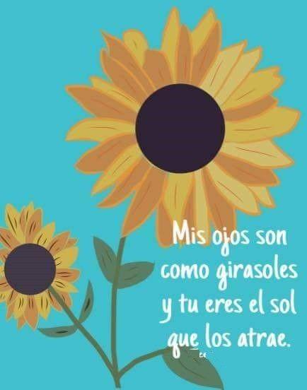 Pin De Estefania Oreamuno En Sunflower Girasoles Frases