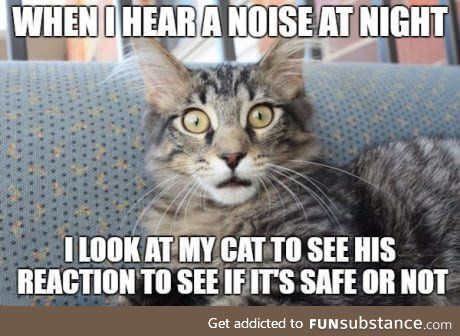 Most Hilarious Cat Memes On Earth Cat Memes Funny Cat Memes Funniest Cat Memes
