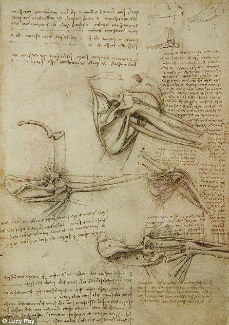 Los Huesos Y Los Musculos Del Hombro Leonardo Da Vinci Dibujo Anatomico Referencia De Anatomia