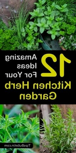 Discover 12 Easy To Grow Herbs For Your Kitchen Herb Garden Learn