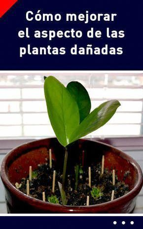 Plantas De Sombra Para Decorar Interiores Decoracionconplantasexterior Backyard Plants Fruit Flowers Plants