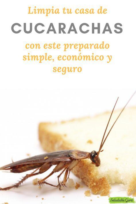 Como Acabar Con La Plaga De Cucarachas Chiquitas No Quedara Ni Una Sola Cucaracha Viva Con Solo Utilizar Estos