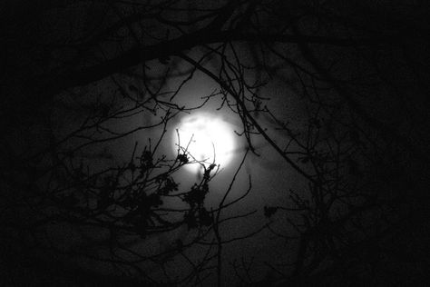 fotografie See the moon trough the trees...