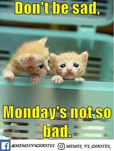 Monday Morning Quotes To Be Happy On Monday Morning Funny Monday Memes Happy Monday Funny Happy Monday Quotes