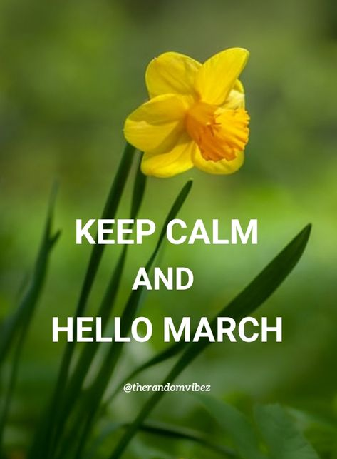 KEEP CALM AND HELLO MARCH!!! #Happymarchquotes #Marchquotes #2021Marchquotes #March2021quotes #Marchmonthquotes #Monthofspring #Hellomarchgreetings #Marchwishesandquotes #Happymonthquotes #Springmonthquotes #Marchimages #Funnymarchquotes #Hellospringquotes #Marchpicturequotes #Marchpics #Byebyefebruary #Welcomemarchquotes #Welcomespring #Beautifulmarchquotes #Marchcaptions #Instaquotes #Instastories #Marchimagesforfb #Quoteoftheday #Quotes #Quotesandsayings #therandomvibez