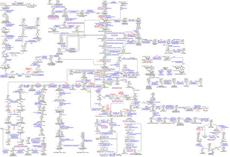The Main Metabolic Pathways on Internet    On this