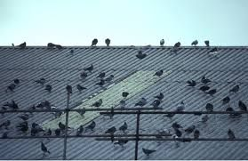 Http Www Pestsolutions Co Uk Get Instant Solutions From Birds