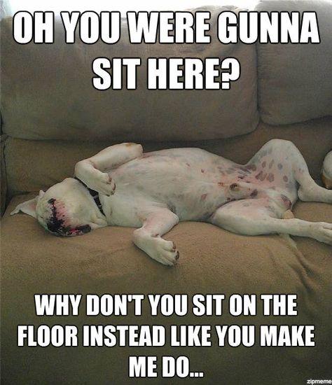 American Bulldog Sayings Http Www Funnyjunk Com