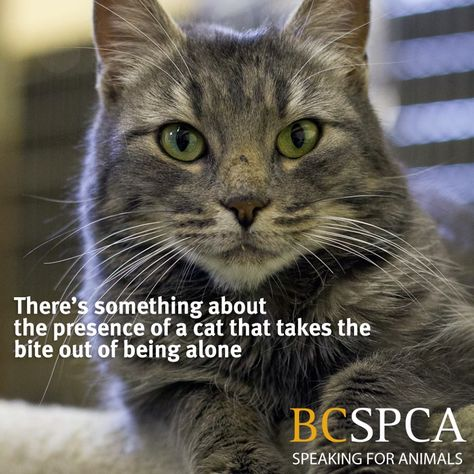 Adoption Page With Images Animals Animal Rescue Spca