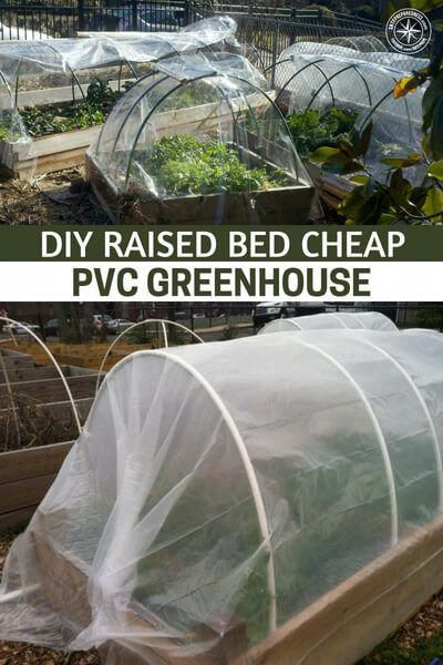 DIY Raised Bed Cheap PVC Greenhouse - Did you know that you ... on french country house plans, earth covered hobbit home plans, energy efficient house plans, pvc house, allison ramsey architects house plans, wood frame house plans, unique modern contemporary house plans, victorian ranch house plans, cold weather dog house plans, old chicken house plans, poultry house plans, small timber frame house plans, pvc parts list, pvc projects, rooster house plans, cheap house plans, straw bale house plans, pvc gardening, pvc light box,