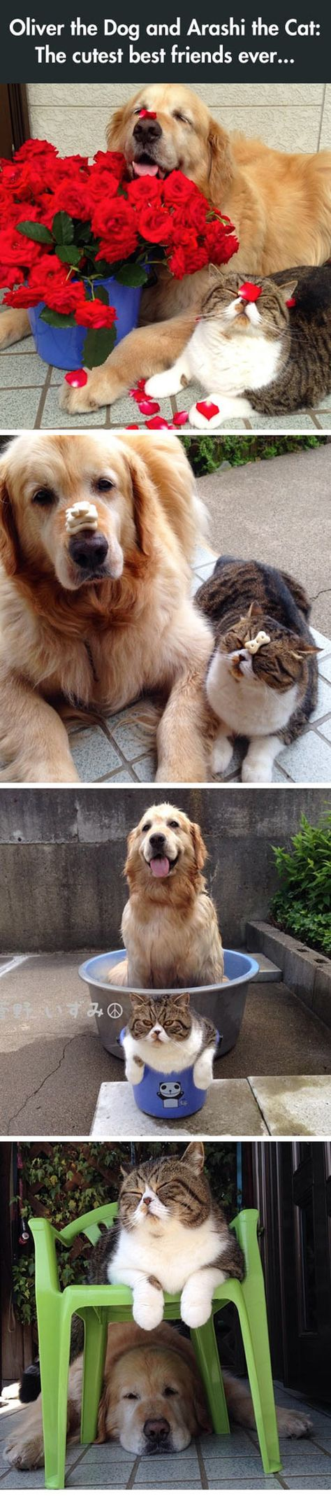 The Most Adorable Best Friends Ever