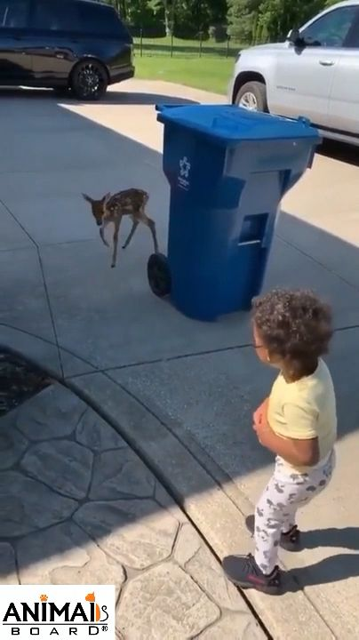 Cute deer baby found his new friend. Please follow Animals Board for more videos.