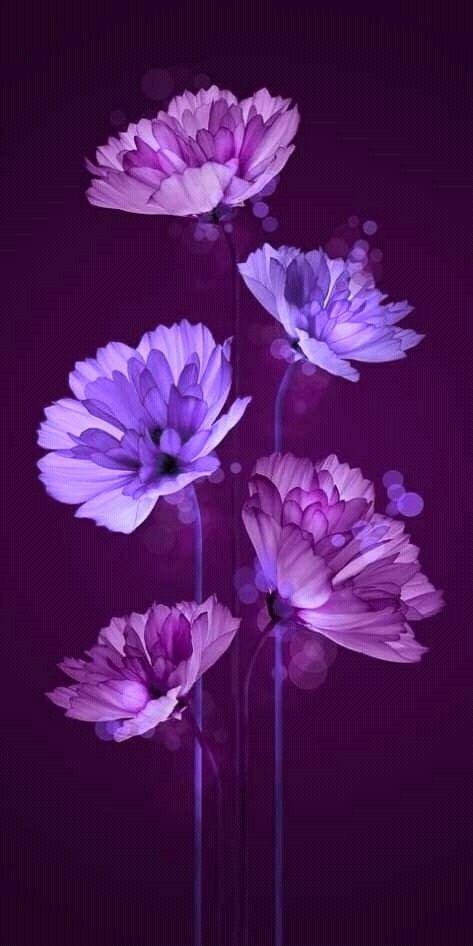 Super Flowers Background Tumblr Purple Ideas Purple Flowers Wallpaper Flower Background Wallpaper Flower Wallpaper