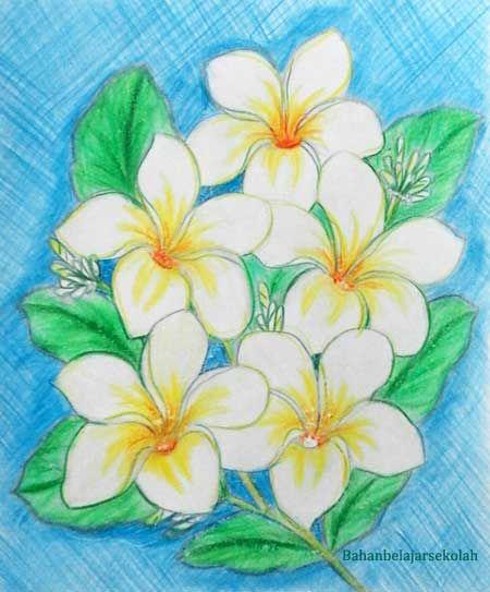 Gambar Bunga Dari Pensil Yang Mudah Menggambar Bunga Kamboja
