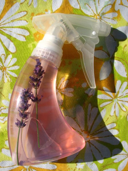 Homemade flea repellent for pets - lavender, lemon, and witch hazel, I've included eucalyptus as well.